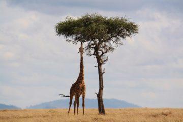 5. Unternehmerinnen-Safari - Für Frauen die gründen und hoch hinaus wollen - Giraffe
