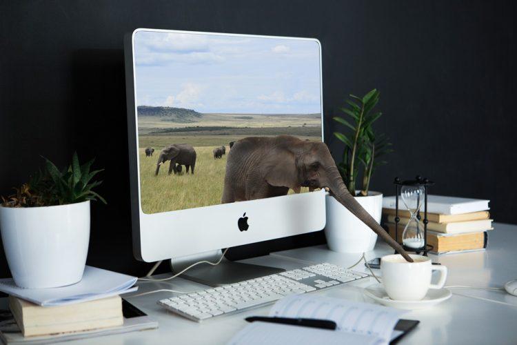 Homeoffice sinnvoll einrichten - Elefant steckt seinen Rüssel aus dem Bildschirm heraus und trinkt aus der Kaffeetasse auf dem Schreibtisch