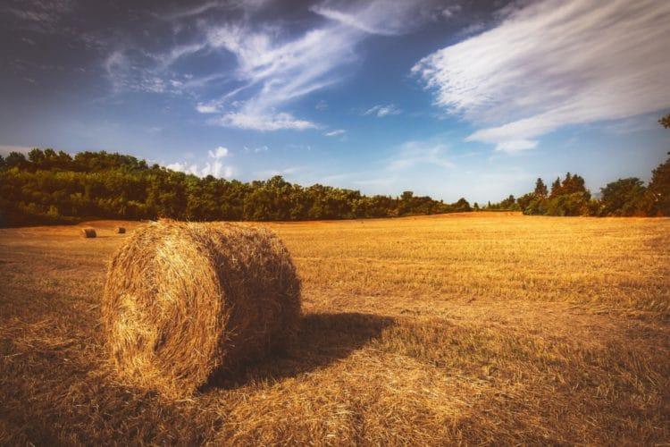 Deutscher LandFrauenverband fordert: Geschlechtergerechtigkeit in Agrarpolitik verankern