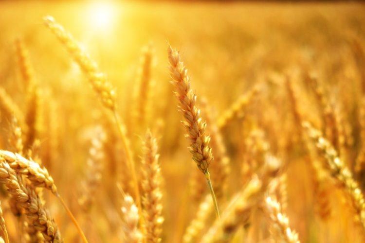 Deutscher LandFrauenverband zum erfolgreichen Abschluss der Zukunftskommission Landwirtschaft